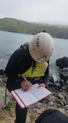 Pohatu penguin team member surveying