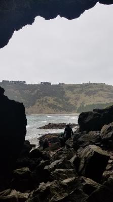 Pohatu penguin surveying Banks peninsula