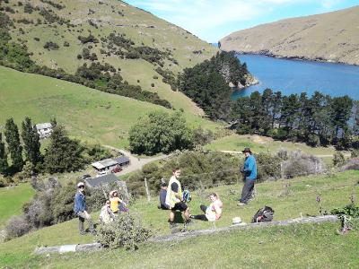 Setting boundaries for a penguin survey