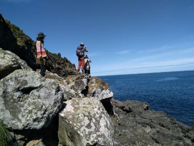 Stony Bay penguin surveying