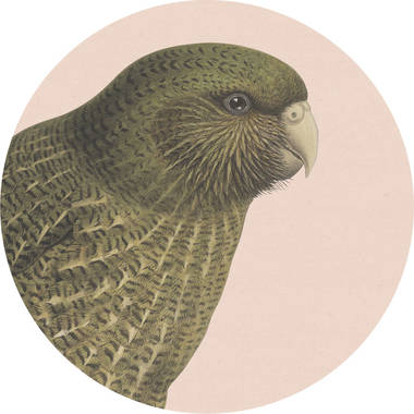 Cork Backed Coaster - Blush Kakapo