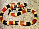 snakes.jpeg