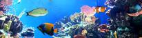 shutterstock aquarium 3 crop