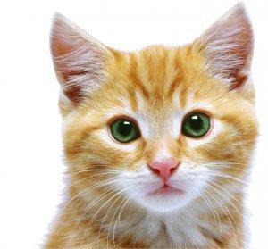 Puusydo_Kitty_litter_Mascot___ginger_Cat_