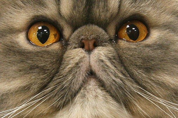 cat_show_pussydo_cat_litter