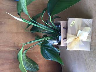 Peace lily and Scilla Chocolates