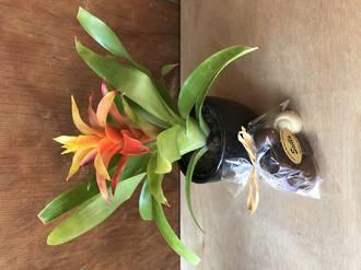 Bromeliad & Chocolates Special