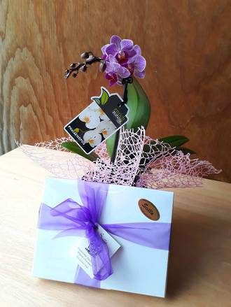 Mini Orchid & Chocolates