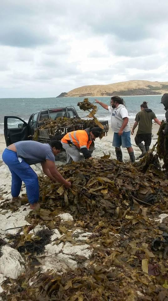 Seaweed Solutions