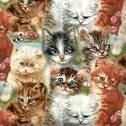 Kittens - All Over
