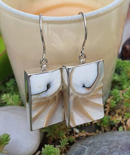 Rectangle nautilus shell silver earrings