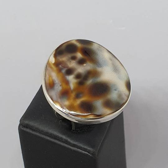 Large round cowrie shell silver ring