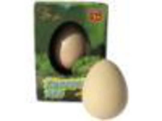 Growing Crocodile Egg