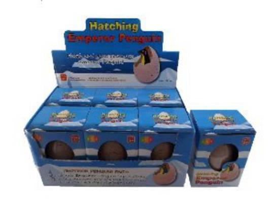Hatching Emperor Penguin
