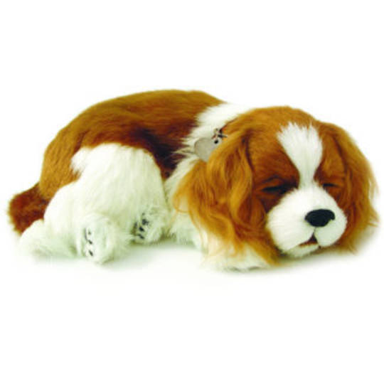 Perfect Petzzz – Cavalier King Charles