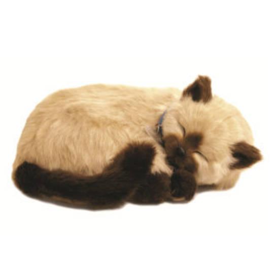 Perfect Petzzz – Tan Siamese Cat