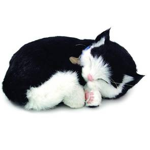 Perfect Petzzz – Black & White Cat