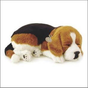 Perfect Petzzz – Beagle Dog