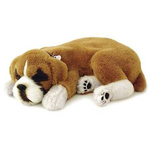 Perfect Petzzz – St Bernard