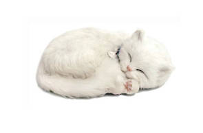 Perfect Petzzz – White  Cat