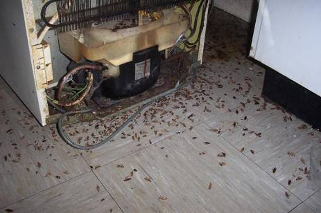 cockroaches under fridge