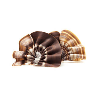 Choc Decoration  - Foret Marbled (165pc) - SOLD OUT