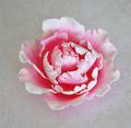 Single Large Closed Peony- Pink- 120mm - Box of 9