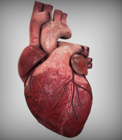Heart-614