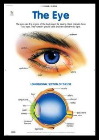 Eye - Poster