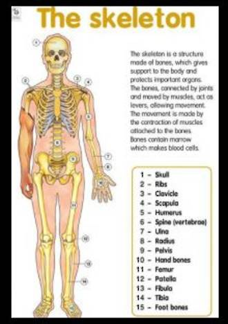 Skeleton - Poster