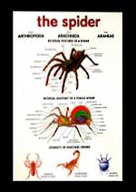 Spider - Poster