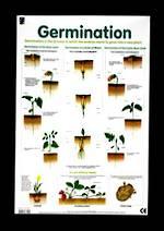 Germination - Poster