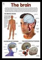 Brain - Poster
