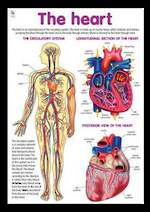 Heart - Poster