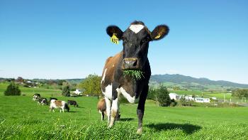 dairy-nz-pasture-first-photo-331