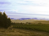 Turner Vineyard Blind River