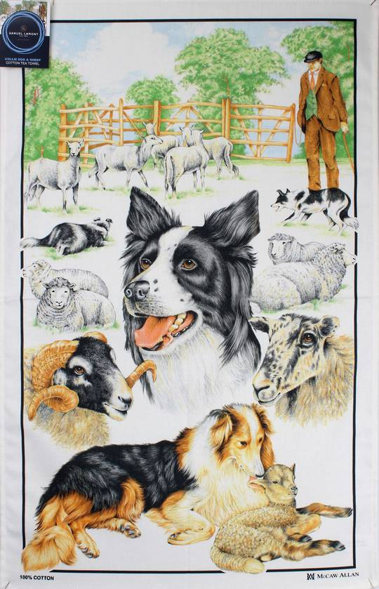 Samuel Lamont 'Collie dog & sheep' tea towel Code : TT-449