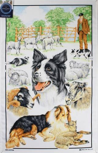 Samuel Lamont 'Collie dog & sheep' tea towel Code : TT-449