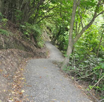 Walking Tracks and Mountain Bike Trails - Valley Landscape