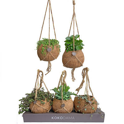 Kokodama 17cm Hanging Nine Plant Package