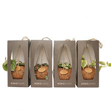 Kokodama 12cm Hanging Sixteen Plant Package