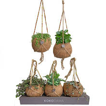 Kokodama 17cm Hanging Nine Plant Package
