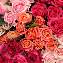 Assorted Pink Roses