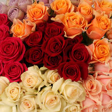 Assorted Standard Roses