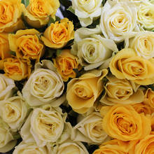 Assorted Yellow Roses