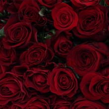 Assorted Red Roses