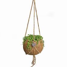Kokodama 15cm Hanging Nine Plant Package