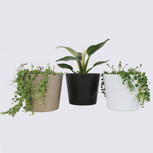 The Plant Trio & Ceramics Special