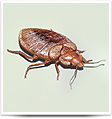 Insect Control, Cockroach Control, Bed Bug Control, Flea Control