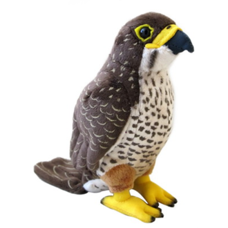 New Zealand Falcon (Karearea)